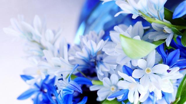 关于花的唯美短句,精选微信唯美花头像、壁纸