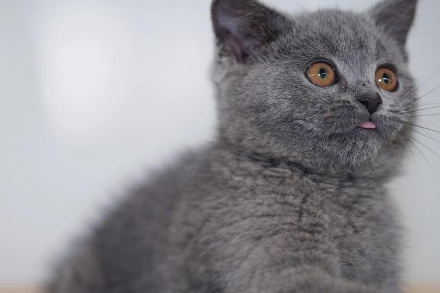 猫的知识,100条养猫冷知识,私藏3年大放送