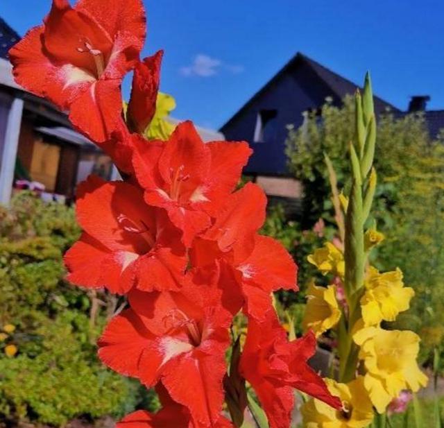 家庭养花,这4种不要错过,日子过得蒸蒸日上