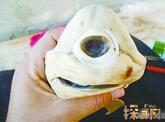 鲨鱼图片,独眼鲨鱼图片,一种罕见先天性缺陷(畸形胎儿)