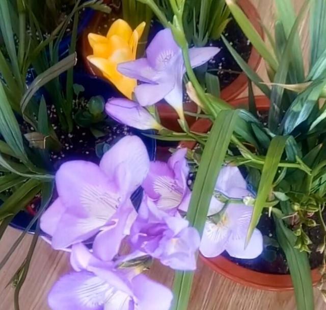 兰花品种,4种最美兰花,不知养什么兰,就选这些