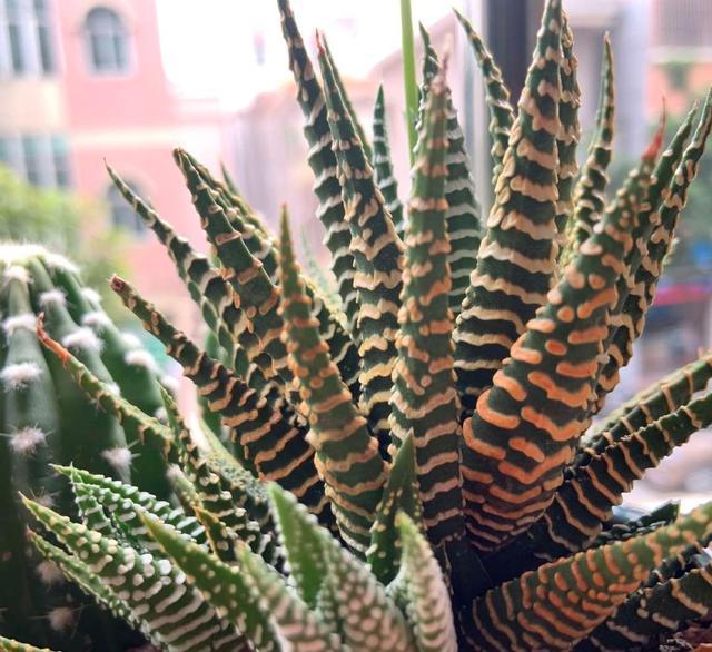 """0种有特色的观叶植物,便宜好养,放在家里清新雅致,别具一格"""""""