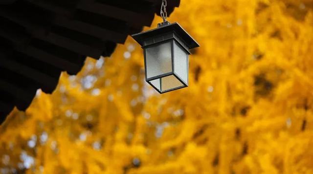 银杏的诗,中国最美10大银杏村,现在挑一个赏叶正好