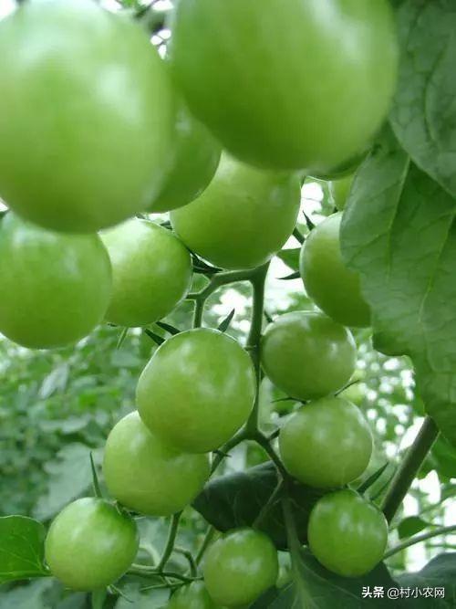 """020年在农村种水果赚钱,这13个新奇特果树,大家更想种哪个呢?"""""""