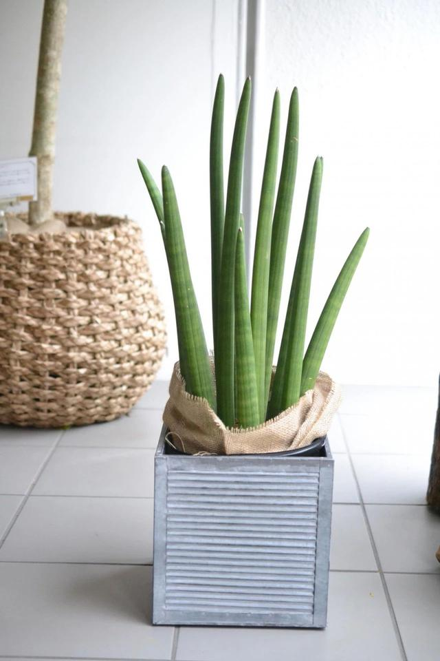 几种适合园艺初学者的室内盆栽绿植,在桌面上都可以养得很好