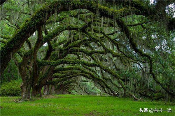 致橡树的诗,舒婷《致橡树》,震撼心灵的经典之作