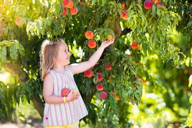 """2种适合种在花园的人气果树,简单好操作"""""""