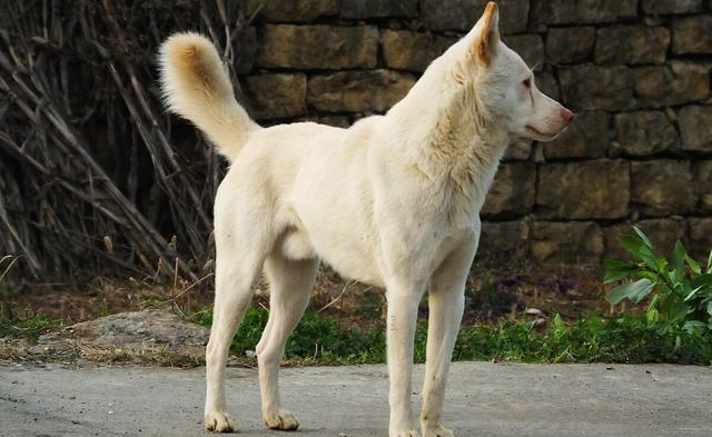 流浪狗的誕生,並非愛狗人士遺棄,它只是一個時代的犧牲品罷了 家有萌寵 第6张