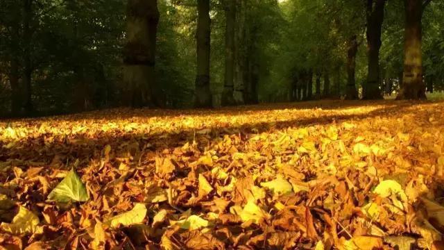 秋季祝福语,关于秋天的好词、好句、好段、好诗