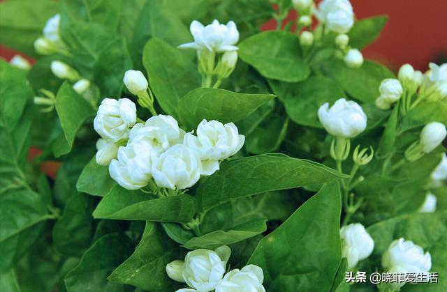 寓意美好,懂花的人,都爱养这5种花,漂亮好养易爆盆,寓意好还养人