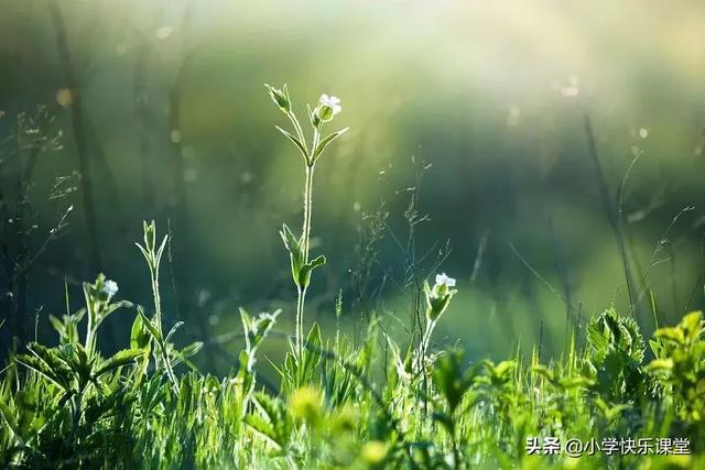 植物的短句,描写景色、树木、花朵、小草的好词/好句/好段/好诗
