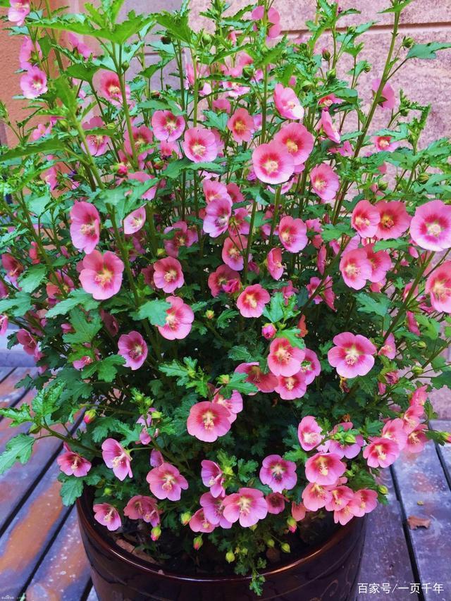 春天有哪些花,20种最适合春天种的花,好看、好闻、好养---总有一款适合你
