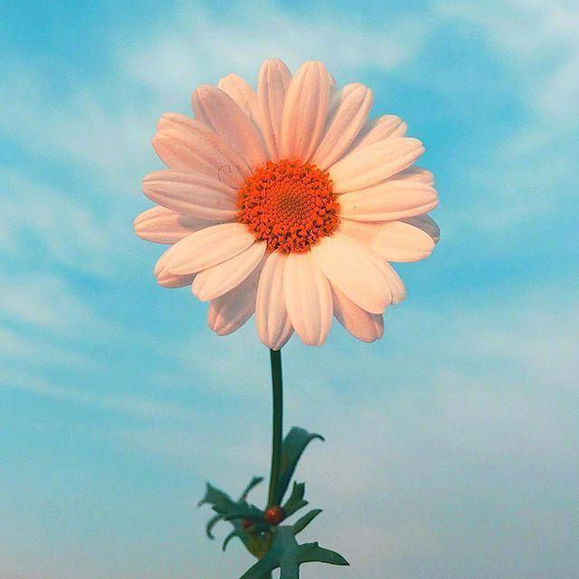 清晨的阳光唯美句子,清晨阳光有内涵的早安语录,让人一见倾心
