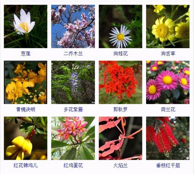 """32种花卉品种图鉴·常见观花植物,从此花神便是你"""""""