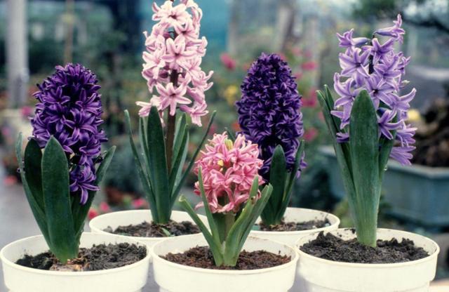 """家庭养花必备4种""""小东西"""",盆栽不生病,长势旺盛开花多"""