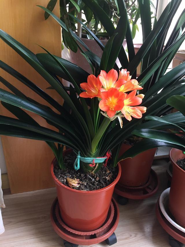 家庭常见花卉养护要点,看完你就都会了(上)