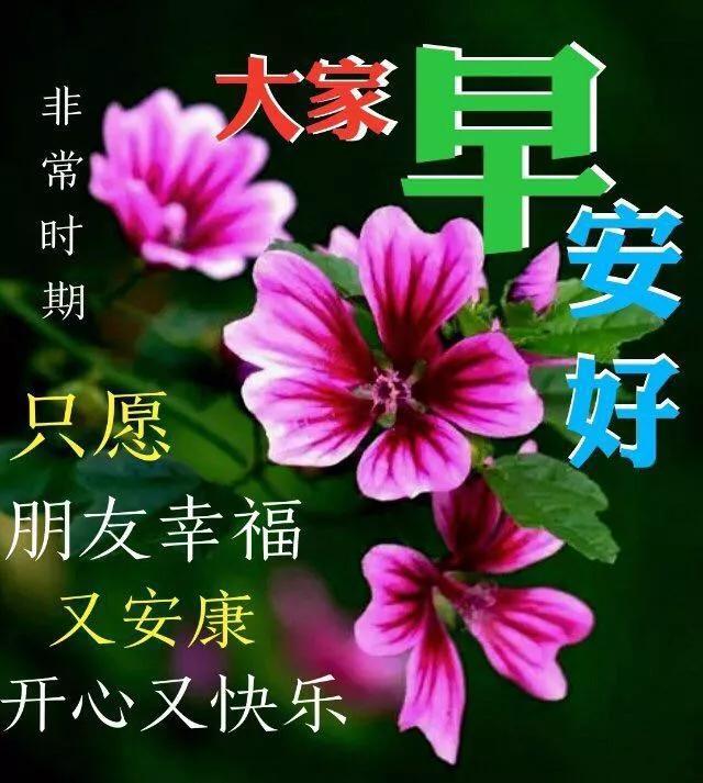 祝福语花,好看唯美的鲜花早上好图片带字,早安图片祝福问候句子