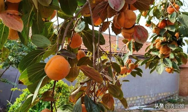 柿子的吃法,初冬,遇到此水果别手软,买上30斤,晒干囤起来,冬天吃特方便
