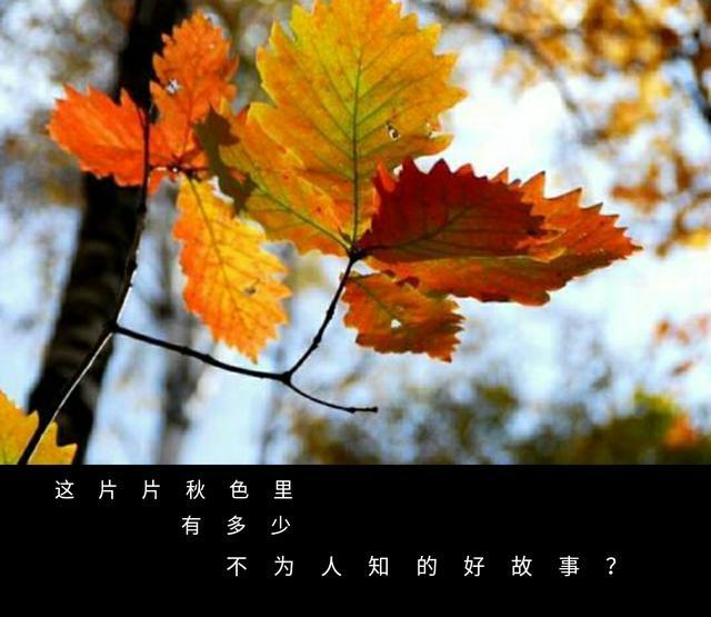 秋的成语,从秋水长天说起——读起来美,背后的故事却很凄凉的秋字成语
