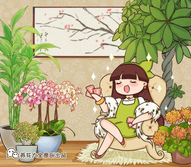 寓意植物,选耐阴花看看这5样,养家里寓意好,阴暗处也照样开花
