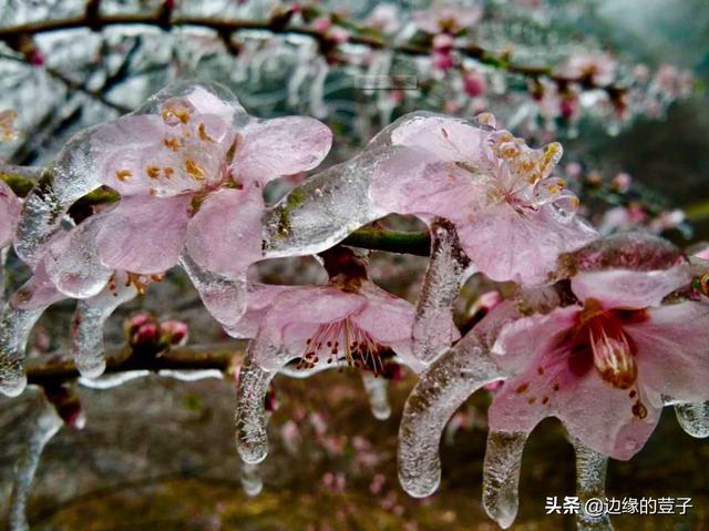最近台风消息,5月迎倒春寒?4次冷空气日期出炉,虫害、台风双预警!农民早准备
