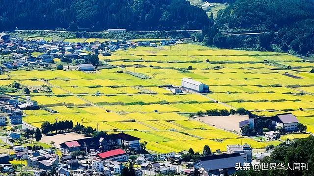 村级简介,日本最有钱的村子:从出生就开始发钱,为什么没有人愿意去住?