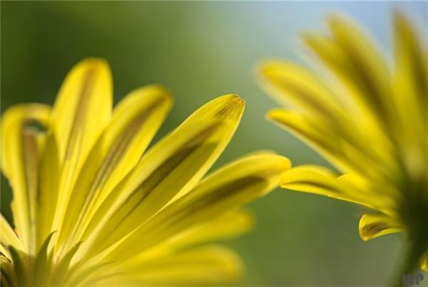 关于生活的短句,让生活充满阳光的句子,句句正能量