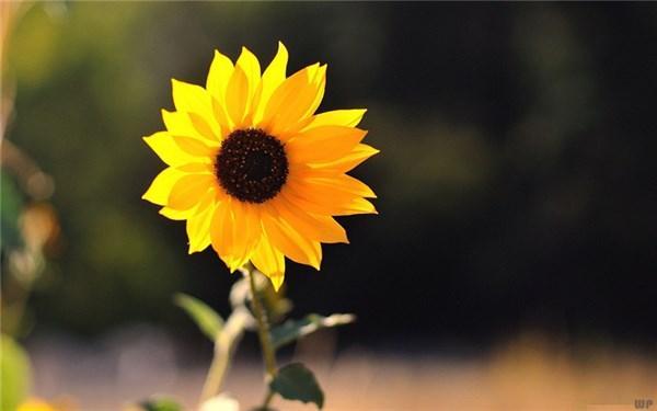 很温暖短句,早安,朋友们 简短温馨短句 愿你每天开心