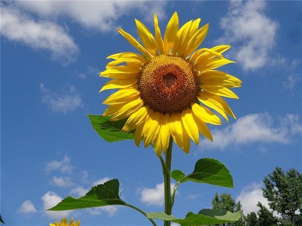 短句说说,最新说说心情短句,句句励志正能量,看了一遍又一遍!