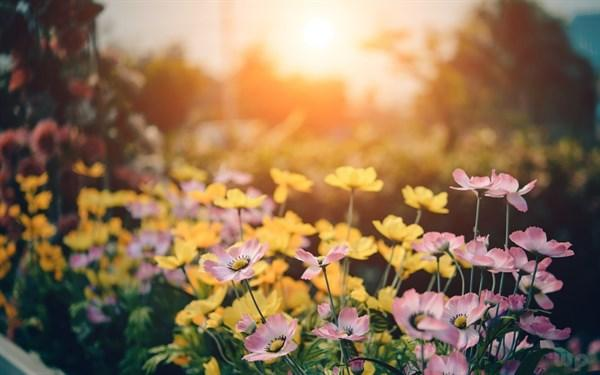 爱的祝福语,早上好每天问候句子,句句真挚,传递爱的祝福