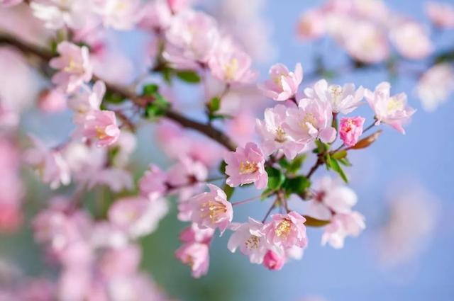 诗的赞美,二月,用诗词赞美春天!