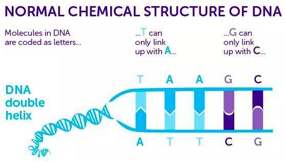 第八字母吧,8碱基DNA的诞生,会是外星生命的遗传密码么?