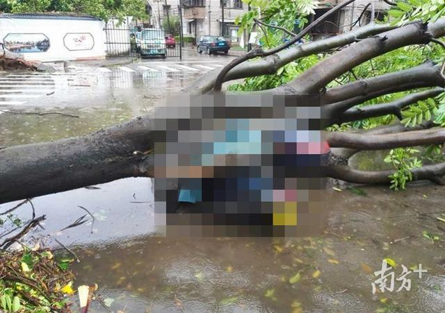 """最新台风消息天鸽,台风""""天鸽""""吹倒大树砸死中山女子,谁来赔?法院五大焦点释法"""