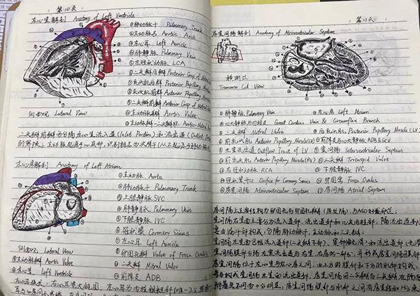 """名人的笔记,川大医学生教科书级笔记走红,网友誉称""""医学界的灵魂画手"""""""