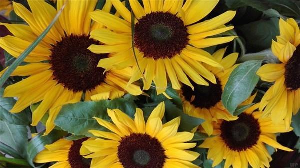 清晨的阳光唯美句子,早安心语唯美阳光的句子,正能量满满,送给自己