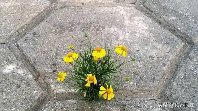 种子的诗,春光达人|和春同住诗三首《种子》《迎春花》《春风》