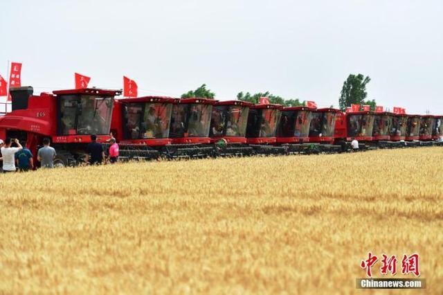 商品种子,2020年全国秋冬种种子供应充足 小麦种子价格同比下降