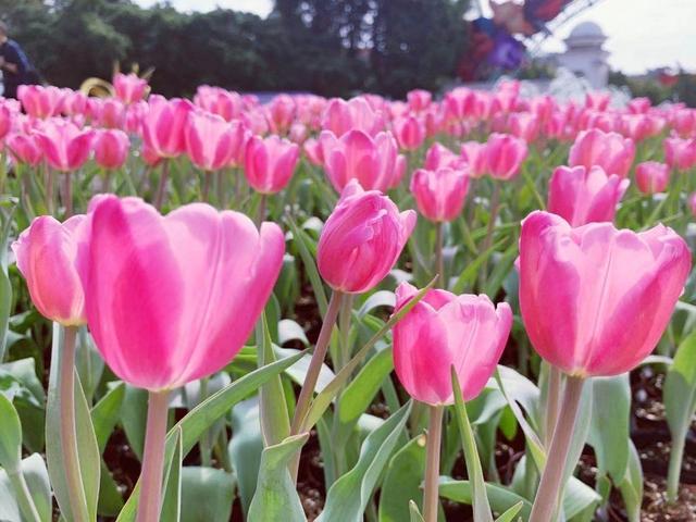 广州白云山风景区,花城花正艳,这个赏花地图你不可错过