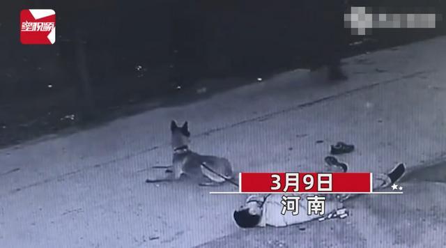 主人醉倒路边宠物狗忠心死守身旁!连声吼叫求救,路人却反被吓跑 全球新闻风头榜 第1张