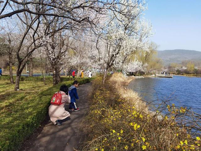 北京花卉,春分去赏花!北京哪些公园都有哪些花,提前看好花期