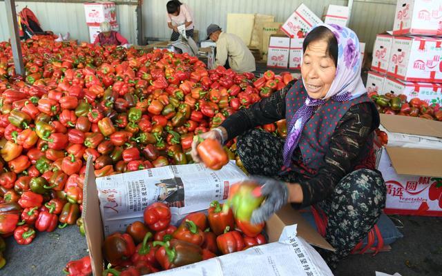 农产品种类,从只有老三样到鲜菜全年供应 来看看中国蔬菜产业进化史
