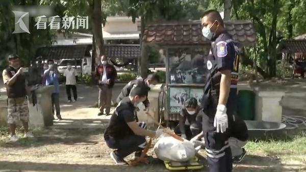 可怕!男子喂大象吃甘蔗 却遭象鼻猛甩重摔致死 全球新闻风头榜 第3张