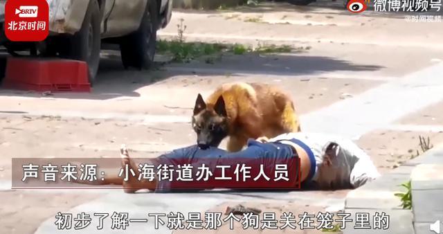 江苏一男子当街被狗撕咬,一动不动!街道办:系男子醉酒逗狗