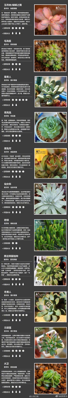 花品种图片,100种多肉植物对照图,再也不愁叫什么名字了