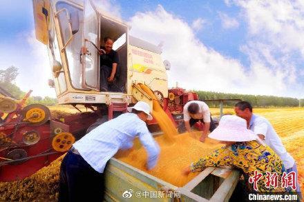 国务院常务会议:对实际种粮农民一次性发放补贴