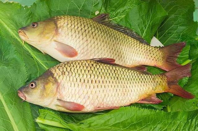 阿五美食,一条鲤鱼成就多少餐饮品牌