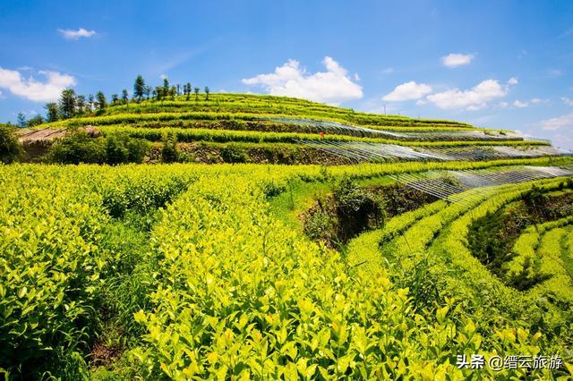 3月节日,沐野澄心·康养三溪   3月27日,邀您共赴第六届缙云黄茶文化节