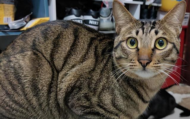狸花貓被困37天,奇跡生還,被救時只有2斤,它是怎麼活下來的 家有萌寵 第4张