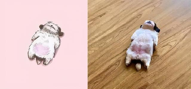 小奶狗靠睡姿走紅,一年後它長大了,更可愛了,還有了40萬粉絲 家有萌寵 第5张