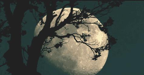 """羽的诗,""""落叶聚还散,寒鸦栖复惊""""——李白的《秋风词》,郭襄的一滴泪"""